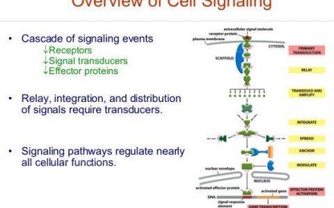 常见细胞信号通路关键蛋白和小分子化合物抑制剂