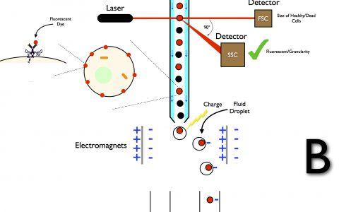 流式细胞技术实验方法