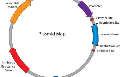 大肠杆菌中的常见的基因突变-Gene mutations in E.coli strains