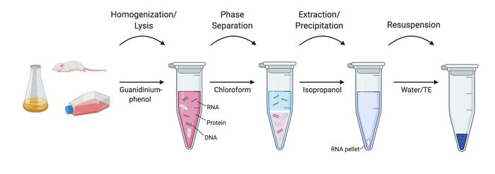 RNA抽提一般方法和流程